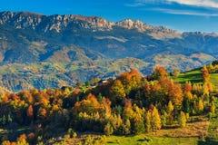 Πράσινοι τομείς και ζωηρόχρωμο δάσος φθινοπώρου, χωριό Magura, Τρανσυλβανία, Ρουμανία Στοκ Φωτογραφίες