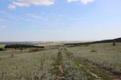 Πράσινοι τομείς και λιβάδια στοκ εικόνες με δικαίωμα ελεύθερης χρήσης