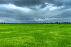 Πράσινοι τομείς και σύννεφο βροχής ρυζιού Στοκ Εικόνα