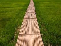 Πράσινοι τομείς ρυζιού και γέφυρα μπαμπού Στοκ φωτογραφία με δικαίωμα ελεύθερης χρήσης