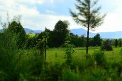 Πράσινοι τομείς στα Καρπάθια βουνά Στοκ Φωτογραφίες