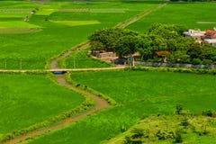 Πράσινοι τομείς στο χωριό του Βιετνάμ Στοκ Εικόνα