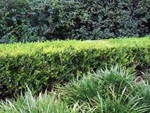 Πράσινοι φράκτες στοκ φωτογραφίες