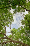 Πράσινοι φύλλα και μπλε ουρανός στον πολύ καλό καιρό Στοκ Φωτογραφία