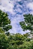 Πράσινοι φύλλα και μπλε ουρανός στον πολύ καλό καιρό Στοκ φωτογραφία με δικαίωμα ελεύθερης χρήσης