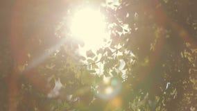 Πράσινοι φύλλα και ήλιος με την όμορφη φλόγα φακών ενάντια στον ουρανό φιλμ μικρού μήκους