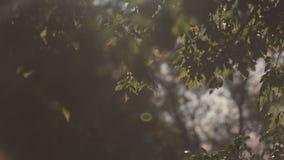 Πράσινοι φύλλα και ήλιος με την όμορφη φλόγα φακών ενάντια στον ουρανό απόθεμα βίντεο