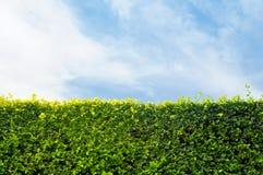 Πράσινοι φύλλα και ουρανός τοίχων με το διάστημα για το κείμενο Στοκ εικόνες με δικαίωμα ελεύθερης χρήσης