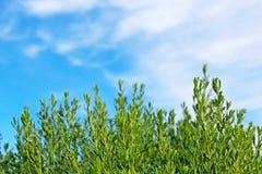 Πράσινοι χλόες και μπλε ουρανός στοκ φωτογραφία με δικαίωμα ελεύθερης χρήσης