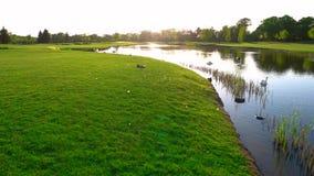 Πράσινοι χορτοτάπητας και λίμνη με τους κύκνους απόθεμα βίντεο