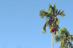 Πράσινοι betel φοίνικες φοινίκων ή areca στο μπλε ουρανό Στοκ Εικόνες