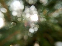 Πράσινος λάμψτε Στοκ Εικόνες