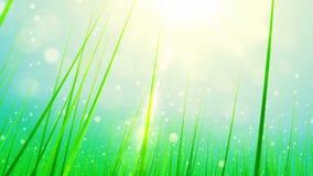 πράσινος ήλιος άνοιξη χλόης απεικόνιση αποθεμάτων