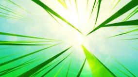 πράσινος ήλιος άνοιξη χλόης ελεύθερη απεικόνιση δικαιώματος