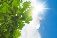 πράσινος ήλιος φύλλων Στοκ εικόνες με δικαίωμα ελεύθερης χρήσης