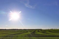 πράσινος αγροτικός ήλιος τομέων Στοκ φωτογραφία με δικαίωμα ελεύθερης χρήσης
