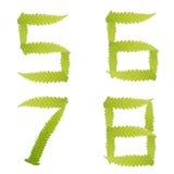 πράσινος απομονωμένος αριθμός φύλλων φτερών Στοκ Φωτογραφία