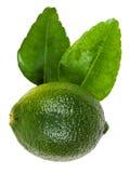 Πράσινος ασβέστης kaffir με τα φύλλα που απομονώνονται στο λευκό Στοκ εικόνα με δικαίωμα ελεύθερης χρήσης