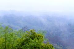 Πράσινος δασικός φρέσκος δέντρων με ομιχλώδη μετά από τη βροχή Στοκ Εικόνα