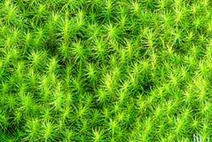 πράσινος ασυνήθιστος χλό Στοκ φωτογραφία με δικαίωμα ελεύθερης χρήσης