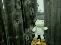 Πράσινος βάτραχος στο φράκτη στοκ φωτογραφία