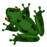 Πράσινος βάτραχος συνεδρίασης που απομονώνεται στο άσπρο υπόβαθρο E ελεύθερη απεικόνιση δικαιώματος