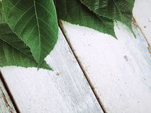 Πράσινος βγάζει φύλλα πέρα από το άσπρο ξύλινο υπόβαθρο Στοκ φωτογραφία με δικαίωμα ελεύθερης χρήσης