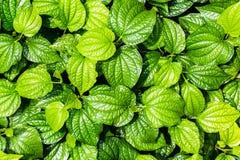 Πράσινος βγάζει φύλλα την ανασκόπηση στοκ εικόνα