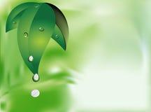 πράσινος βγάζει φύλλα ελεύθερη απεικόνιση δικαιώματος