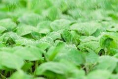 Πράσινος βγάζει φύλλα με τις πτώσεις νερού σε το Στοκ Φωτογραφία