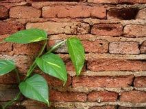 Πράσινος βγάζει φύλλα στα κόκκινα brocks Στοκ φωτογραφία με δικαίωμα ελεύθερης χρήσης