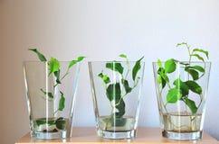 Πράσινος βγάζει φύλλα στο άσπρο υπόβαθρο Στοκ εικόνες με δικαίωμα ελεύθερης χρήσης