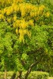 Πράσινος βγάζει φύλλα στο μεγάλο δέντρο στο πάρκο Στοκ εικόνες με δικαίωμα ελεύθερης χρήσης