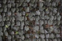 Πράσινος βγάζει φύλλα την κάλυψη ενός πλέγματος metall Στοκ εικόνα με δικαίωμα ελεύθερης χρήσης