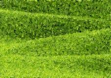 Πράσινος βγάζει φύλλα το κύμα Στοκ Φωτογραφία