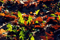 Πράσινος βγάζει φύλλα Στοκ Φωτογραφία