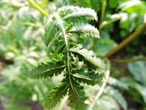Πράσινος βλαστός στον κήπο στοκ εικόνα με δικαίωμα ελεύθερης χρήσης