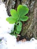 πράσινος βλαστός στοκ φωτογραφίες