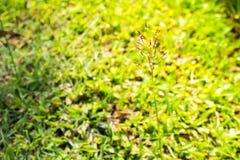 Πράσινος για αστικό στοκ φωτογραφία με δικαίωμα ελεύθερης χρήσης