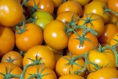 πράσινος διάφορες ντομάτες μίσχων κίτρινες Στοκ εικόνες με δικαίωμα ελεύθερης χρήσης