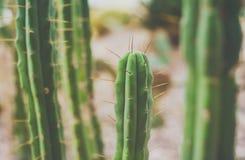 Πράσινος εξωτικός κάκτος, φύση, πράσινο υπόβαθρο Μεξικανός, travelli στοκ φωτογραφίες