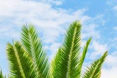 Πράσινος εξωτικός τροπικός κλάδος φοινίκων σε ένα ανοιχτά μπλε και ένα μόριο στοκ φωτογραφίες