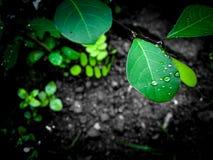 Πράσινος εραστής στοκ εικόνα με δικαίωμα ελεύθερης χρήσης