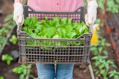 Πράσινος εργαζόμενος σπιτιών που κρατά ένα κλουβί Στοκ φωτογραφία με δικαίωμα ελεύθερης χρήσης