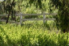 Πράσινος ηλιοφώτιστος τομέας στοκ φωτογραφίες