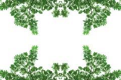 Πράσινος θάμνος φύλλων σύστασης που απομονώνεται στο άσπρο υπόβαθρο Στοκ φωτογραφία με δικαίωμα ελεύθερης χρήσης