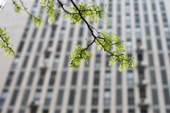 πράσινος θελήστε Στοκ Φωτογραφία