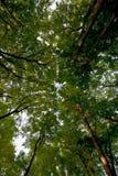 Πράσινος θόλος φύλλων Στοκ φωτογραφία με δικαίωμα ελεύθερης χρήσης