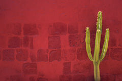 Πράσινος κάκτος πέρα από τον κόκκινο τοίχο, Santa Catalina Monastery, Arequipa Στοκ Εικόνες