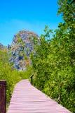 Πράσινος κήπος με τον ξύλινο τρόπο περιπάτων γεφυρών Στοκ Εικόνα